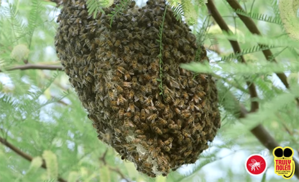 Tips: Avoid Bee Infestations