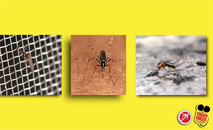 Tips: Prevent Exposure to Mosquitoes